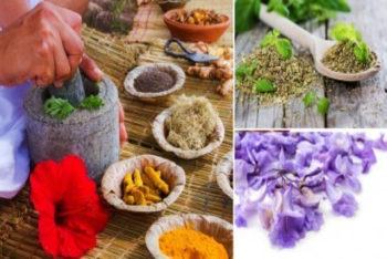 15 plantas com ação antibiótica e antiviral